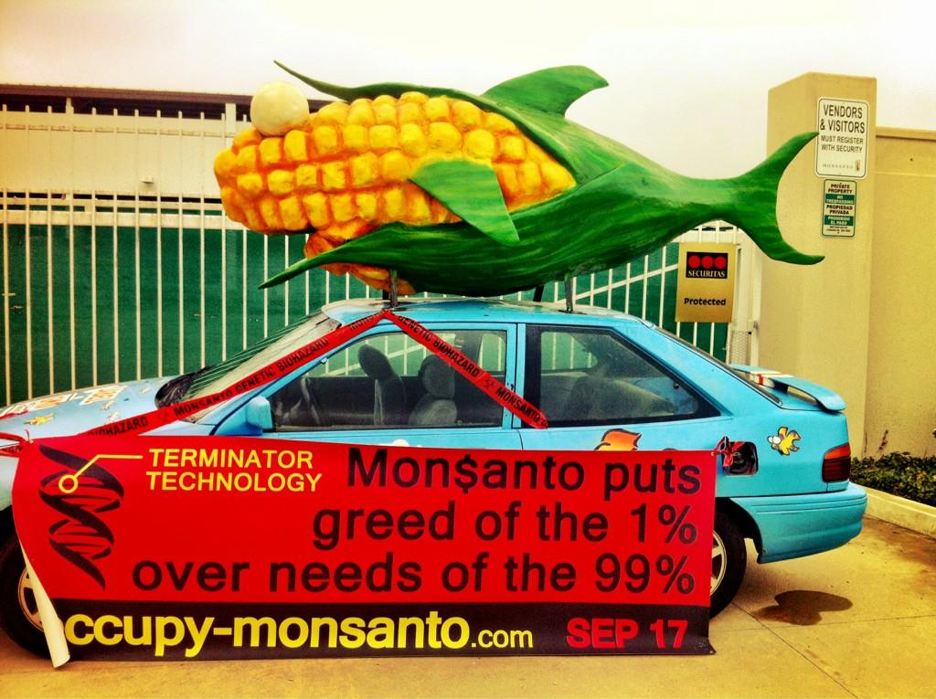 oxnard action photo 31 Photos of GCU Field Agents occupying Monsantos Oxnard facility Seminis Protest Oxnard Occupy Monsanto GMO Seeds GCU Direct Action Decontamination Event CA
