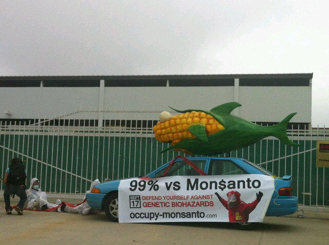 oxnard action photo 44 Photos of GCU Field Agents occupying Monsantos Oxnard facility Seminis Protest Oxnard Occupy Monsanto GMO Seeds GCU Direct Action Decontamination Event CA