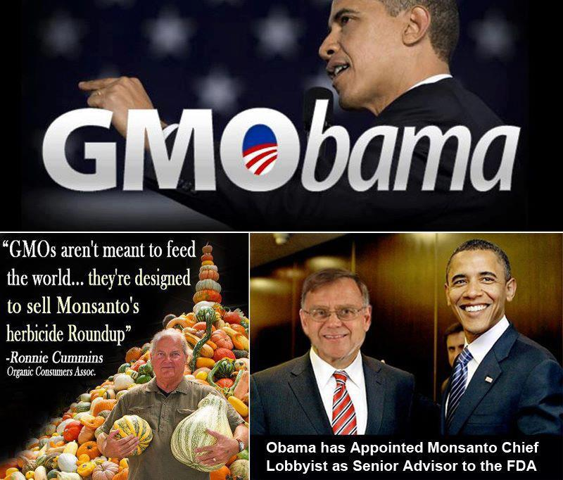GMOobama Occupy the GMO Candidate   Oct. 17, 2012 Protest Occupy Monsanto Mitt Romney GMO Labeling gmo GCU Field Agents Demonstration Decontamination Event Decentralized Candidate Barack Obama