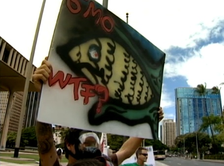 kitv honolulu KITV: Occupy Honolulu protest launched on UH campus video University of Hawaii at Manoa Protest Occupy Honolulu No GMO March Label GMO KITV Honolulu Demonstration