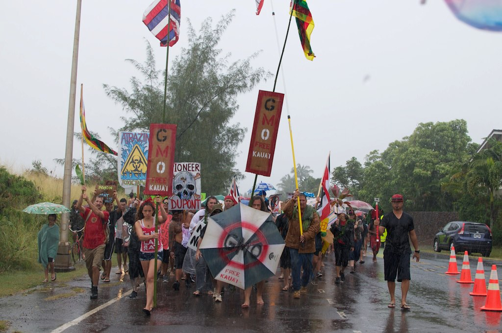 march in march to evict monsanto 3 9 2013 kauai6 INCIDENT REPORT: Thousands March in March to Evict Monsanto from Kauai Walter Ritte Testing Protest Poipu Photos pesticides March in March to Evict Monsanto Kauai GMO Labeling gmo Demonstration Chemicals agriculture