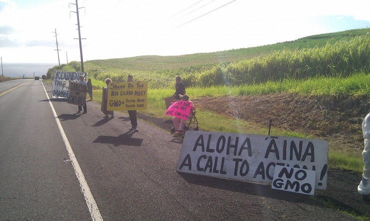 big island no gmo e1349184860515 Hawaii Tribune Herald: GMO corn grower spurs protest   Soil Russell Kokubun Ookala Marva Joy Bennett livestock jatropha Idaho HI Hawaii Tribune Herald Hawaii Hamakua Agriculture Plan Hamakua GMO Free Hawaii GMO Corn gmo GE Foods Eden Peart Dominic Yagong dairyman Cloverleaf Dairy cake biofuel Big Island Dairy Big Island Bahman Sadeghi algae